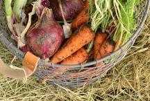 Root Cellar - Fruit and Veggie Storage