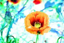 My artworks:  Unikko. Poppy / Taidetta