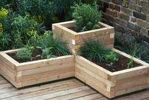 Fűszernövény kert