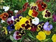 Kevätparveke