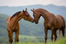 HORSES 2 / by Liz Snyder