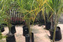 Garden waimakariri
