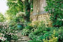 Hosta Gardens / by Shibori Dragon