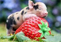 My next pet? / Cute baby animals