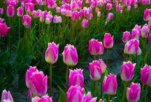 Flores, jardins e cores.