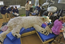 Zoo Animals and Veterinary Procedures / by SonoPath .com