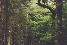 You find me in the forest