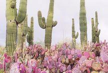 // Cacti