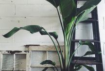 Plant voor binnen