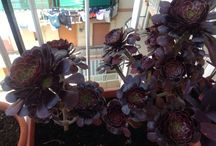 Pollice verde / Giardino sul balcone