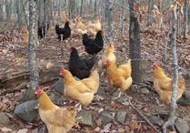 My Chickens / by Lori Jaynes