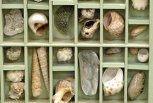 Shells / Collections