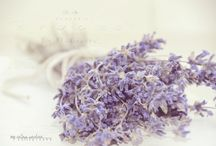 Eye Candy - Lost in Lavender / Lavender. I'm obsessed with it! :)