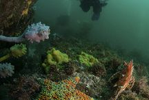 Underwater in Jervis Bay - Diving and Snorkelling