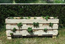 Garden / Pallets