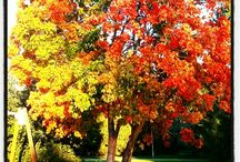 syksy/autumn