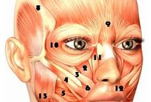 Face Analysis. / Aesthetically & physiological study of the human face.