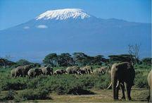 SAFARIS AFRICA