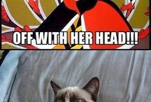 Grumpeh Cat / I love grumpy cat so much <3
