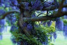 pohon hutan indah