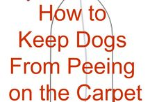 stop dog peeing