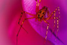 Skittery scaly  spiky spidery
