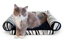 Outdoor Heated Cat Bed