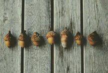instagram autumn