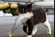 chat alors !