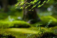 Green / Vert / by Yvan Vasovic