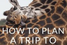 Travel in Africa / Have you ever dreamed of going on a safari in Botswana? How about exploring Cape Town, South Africa? The possibilites are endless with these tips and itineraries for traveling in Africa.  Learn all the best travel and packing tips to have fun and stay safe! From Kenya to Zimbabwe to Egypt-- where will you travel next?