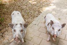 Tierheim Tiere - Shelter Animals / Rümlang Helena Frey Stiftung für Tierschutz