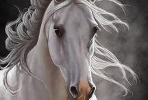 Cavalli - Horses