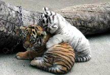 cute ♥ animals