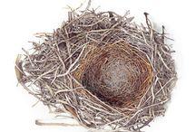 My Nests
