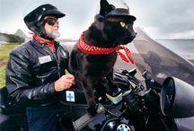 Animals & Bikes
