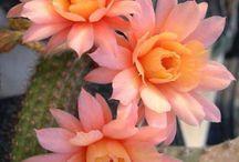...Vida e flor...