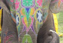 I want my Elephant!