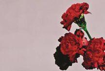love.songs