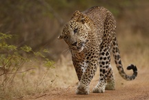 Wild Life / by Amaya Resorts & Spas