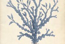 바닷속 풍경 산호초