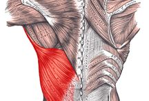 Mid back muscle pain