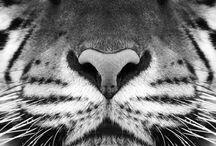 I Love <3 animals