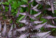 plants I like / by Shelly Wason Photography