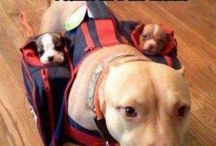 Rozkošné šteniatka