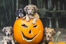 Halloween Hunde