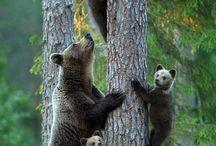 Cute&Fun Animals