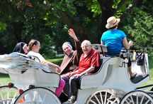 Carriage Rides 2014 / St. Ann's residents enjoyed carriage rides around the campus on a beautiful July afternoon.