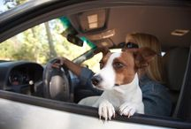 Driving with Fido / Driving with your pet can be challenging..here are a few great ideas and products to keep you both happy and safe!