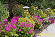 Outdoor Plantings / by Jerry Rose Floral and Event Design